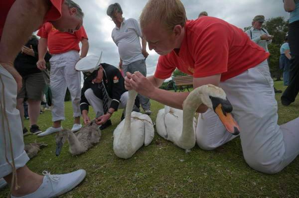 Swan inspection
